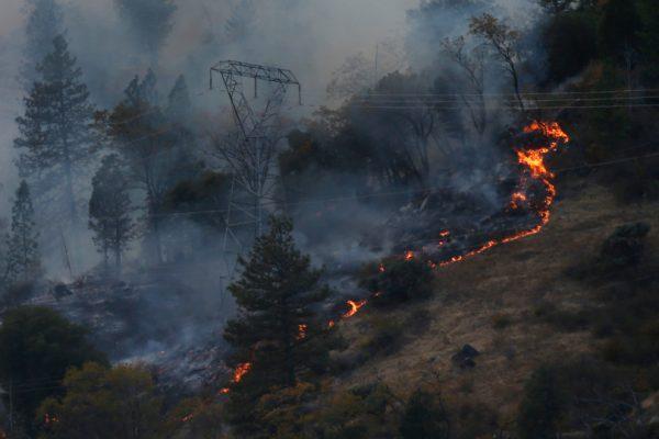 Photo of fire snaking along hillside