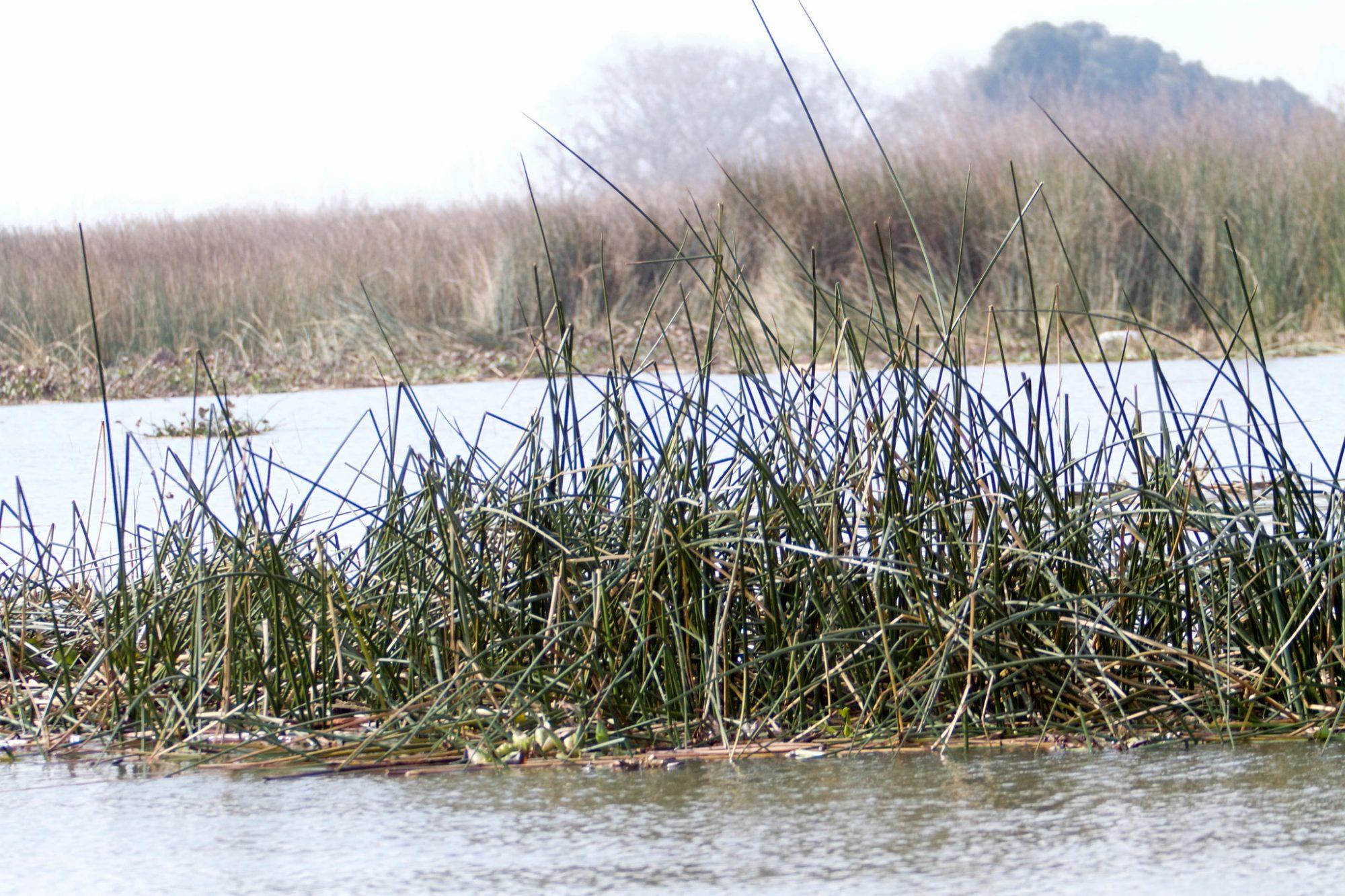 California's Sacramento-San Joaquin River Delta. USFWS photo by Steve Martarano via Flickr