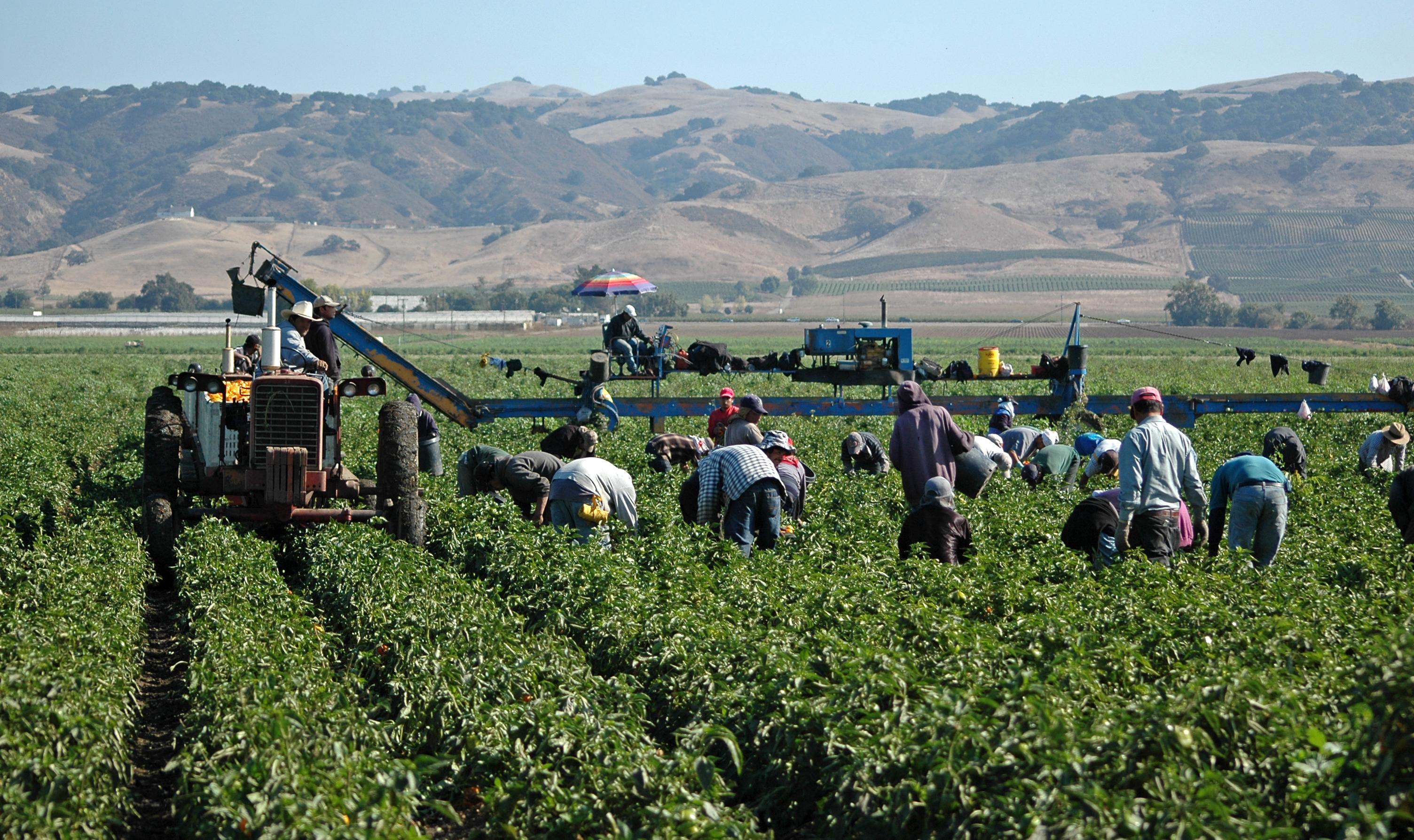 California farmworkers