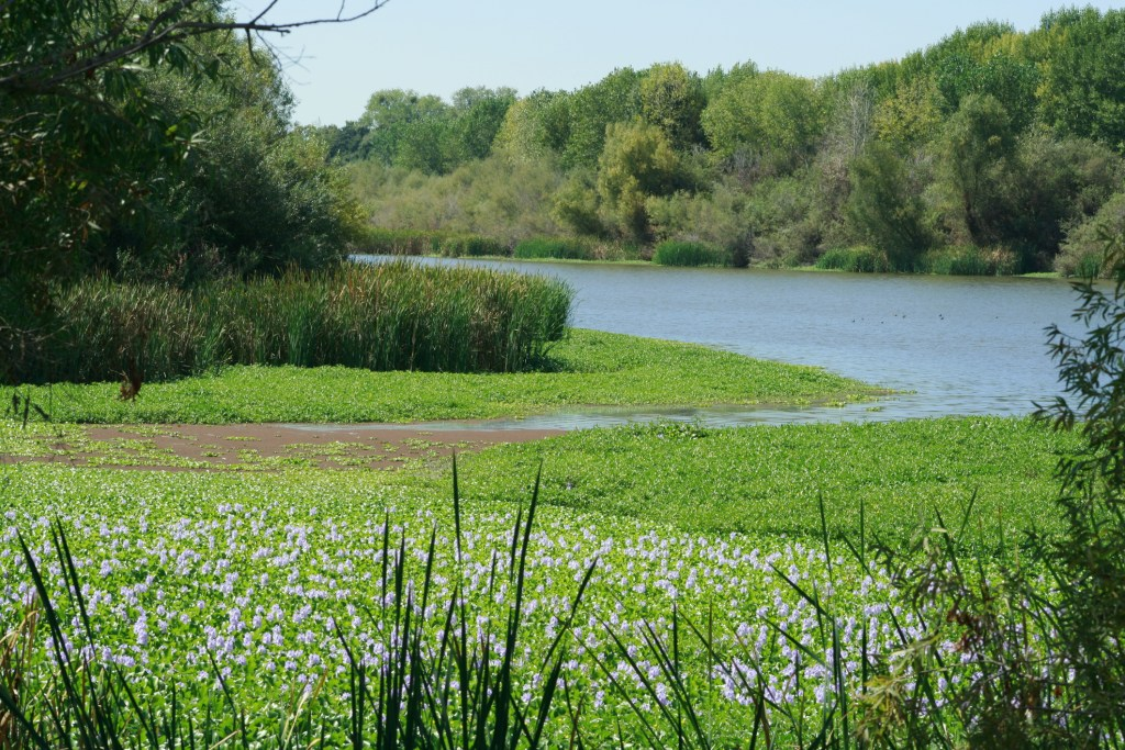 Without agreements on water, California needs to set new objectives and protections for Delta - CALmatters